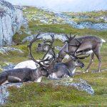 Randonnée Norvège - Rennes en Laponie