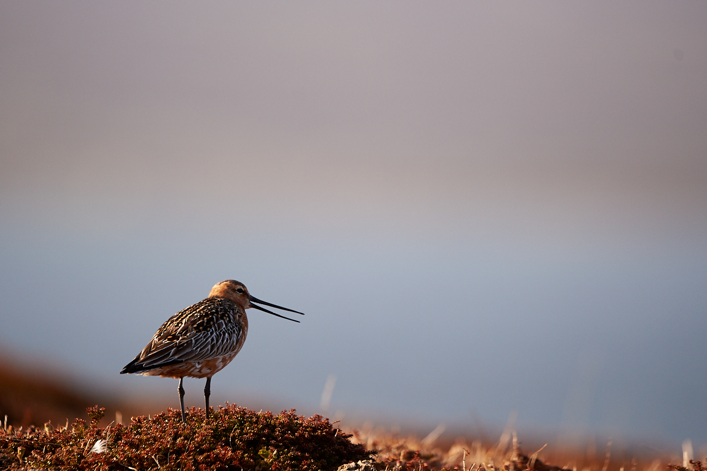 voyage photo Norvège - Varanger