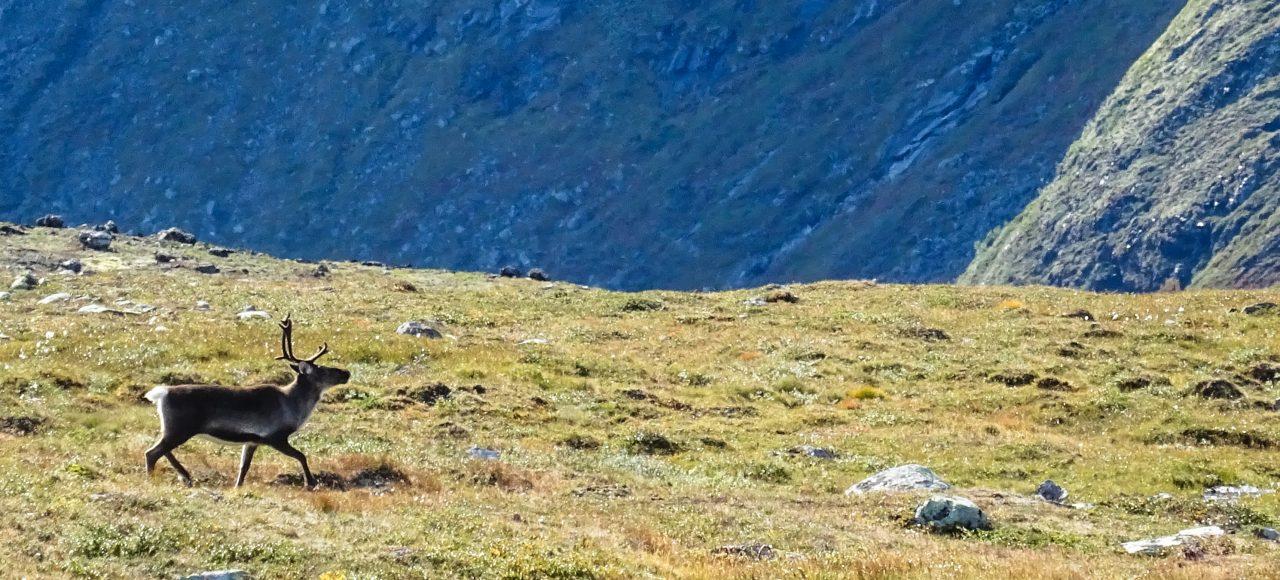 Randonnée Norvège - Laponie