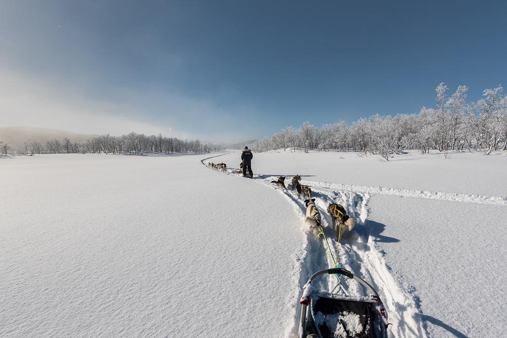 Randonnée chien de traineau Norvège - Senja